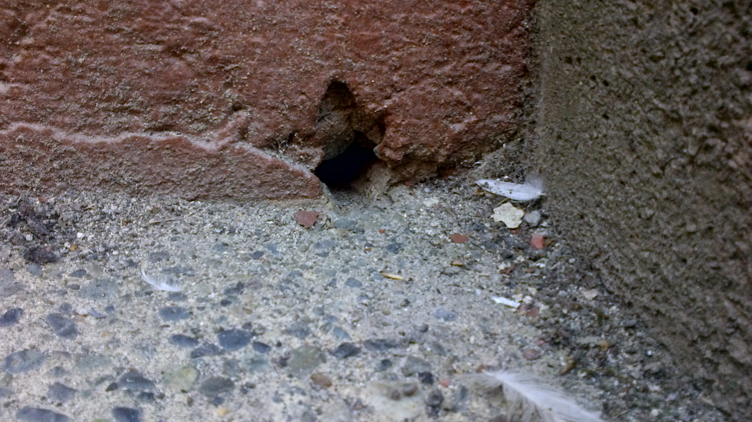 Mice Entering Commercial Building