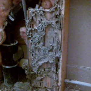 termites feeding on wood in bathroom